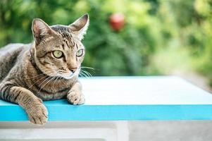 The eyes of a striped cat outside photo
