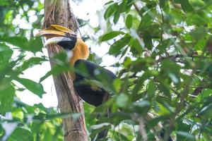 Looking up at a hornbill bird in a tree photo