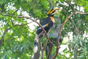 Hornbill bird in a tree in the woods photo