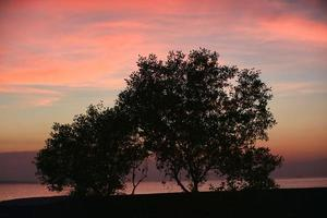 Silhouette of a tree on the beach side backdrop of an orange sky during sunset or twilight time