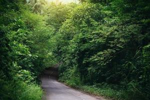 Asphalt road in a forest with green trees
