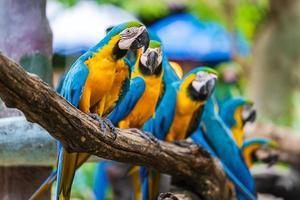 Guacamayos de colores en las ramas de los árboles foto
