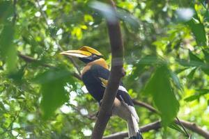 Looking up at hornbill bird photo