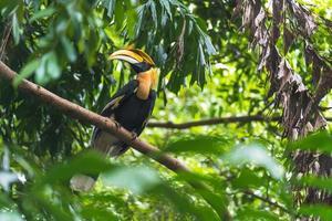 pájaro de cálaos en un árbol foto