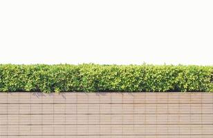 Stone fence with greenery