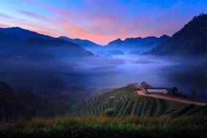 Morning mist at the terrace of tea at Doi Angkhang in Chiangmai, Thailand photo