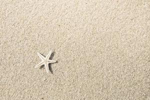 estrella de mar en la playa foto