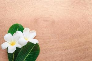 Frangipani o plumeria flores sobre un fondo de madera