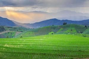 Terrace rice field in Thailand photo
