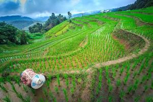Terrace rice field in Thailand