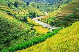 Terrace rice field at Mu Cang Jai, Vietnam