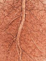The root of a tree and soil background photo