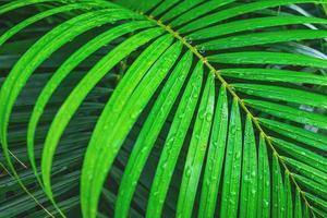 Lush coconut leaf