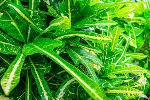 Lush green leaves photo