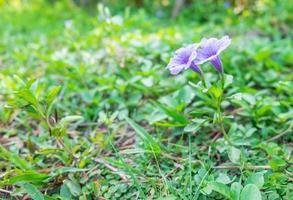 flores moradas afuera foto
