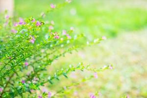 pequeñas flores moradas foto
