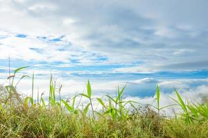 Grass on the hill in summer photo