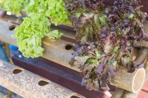 parcelas de hortalizas orgánicas foto