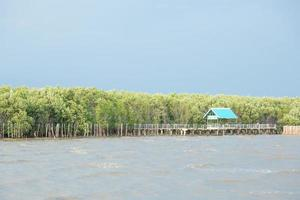Nature trails in the mangrove forest by the sea
