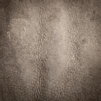 Skin of a rhinoceros