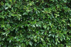 fondo de hojas y plantas verdes foto