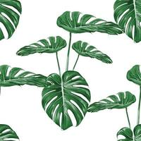 Seamless pattern monstera green leaf on isolated white background. Vector illustration dry watercolor hand drawing stlye.Fabric design texitle