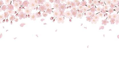 Fondo floral transparente con flores de cerezo en plena floración aislado sobre un fondo blanco. horizontalmente repetible. vector