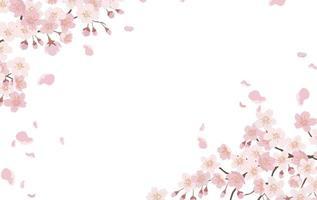 Fondo floral con flores de cerezo en plena floración aislado en un fondo blanco. vector