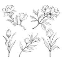 Dibujado a mano flores silvestres y hierbas y hojas ilustración aislada sobre fondo blanco. vector