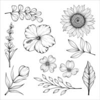 Hand drawn wild and herbs flowers and leaves illustration isolated on white background. vector