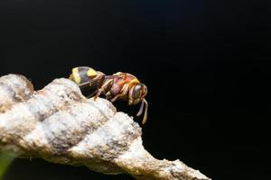 Hornet on a branch