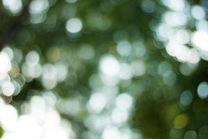 Defocused soft blur green bokeh photo