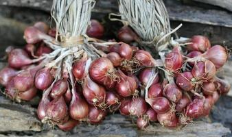 Group of red shallots