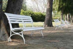 Benches and trees photo