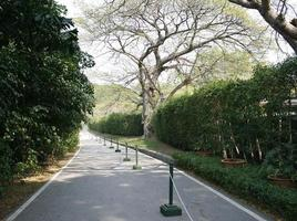 Lined pathway through a park photo
