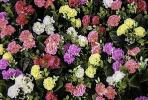 Multicolored bed of flowers