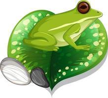 rana verde en una hoja aislada vector