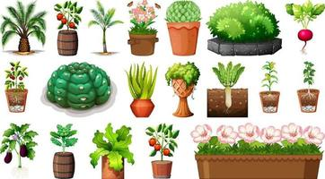 Set of different plants in pots isolated on white background vector