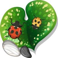 Top view of ladybug on a leaf isolated vector