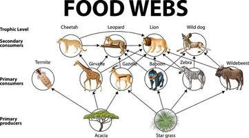 Education poster of biology for food webs diagram vector