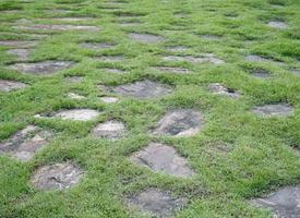 piedras en la hierba