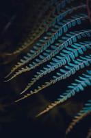 Blue fern leaf in the nature