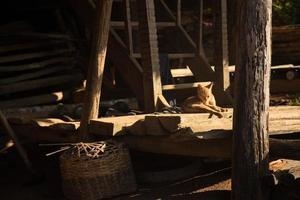 Stray cat in the sunlight photo