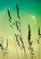 Moon and tall grasses background