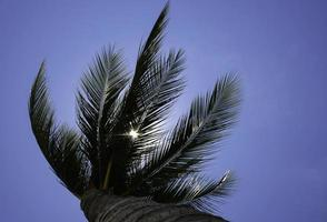 Palm tree and sunlight