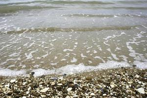Seashells and waves photo