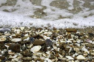 Seashells and seafoam photo