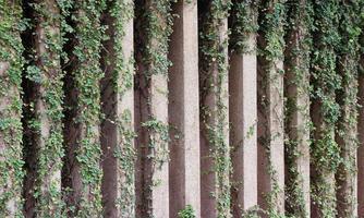 valla de muro de piedra y planta foto