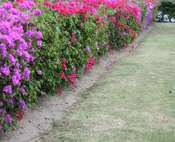 Flower hedge with a green lawn photo