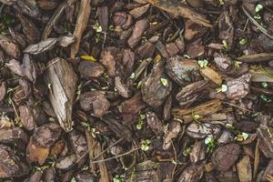 Fondo de un piso cubierto por mantillo de corteza de pino natural foto